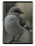 Mocking Bird Cuteness - Featured In Wildlife Group Spiral Notebook