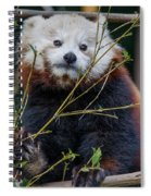 Mohu The Teenage Red Panda Spiral Notebook