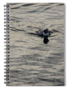 Moire Silk Water And A Long Tailed Duck Spiral Notebook