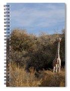 Momma And Baby Giraffe Spiral Notebook