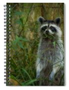 Momma Coon Spiral Notebook