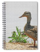 Momma Duck And Baby With A Different View Spiral Notebook