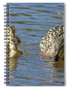 Momma Mallard And Her Ducklings Spiral Notebook