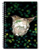 Mommy Hummingbird In The Nest Spiral Notebook