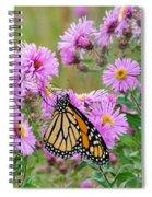 Monarch 1 Spiral Notebook
