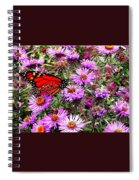 Monarch Among The Asters Spiral Notebook