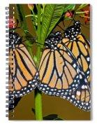 Monarch Butterflies Spiral Notebook