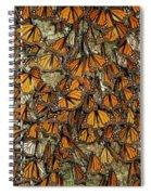 Monarch Butterflies Wintering Spiral Notebook