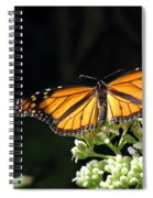 Monarch Butterfly 61 Spiral Notebook
