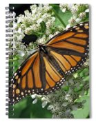 Monarch Butterfly 62 Spiral Notebook
