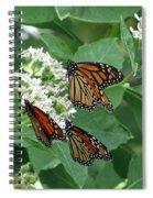 Monarch Butterfly 63 Spiral Notebook