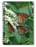 Monarch Butterfly 64 Spiral Notebook
