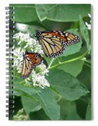 Monarch Butterfly 67 Spiral Notebook