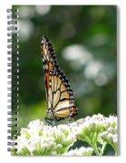 Monarch Butterfly 72 Spiral Notebook