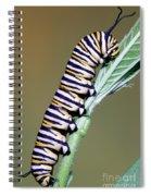 Monarch Butterfly Caterpillar Spiral Notebook