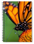 Monarch Butterfly Headshot Spiral Notebook