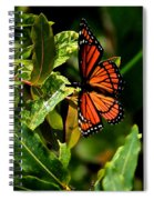 Viceroy Butterfly II Spiral Notebook