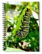 Monarch Caterpillar 5 Spiral Notebook