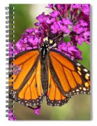 Monarch Hangs On To Buddleia Spiral Notebook