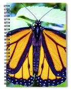 Monarch I Spiral Notebook