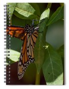 Monarch In The Shade Spiral Notebook