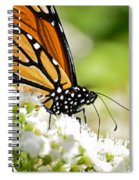 Monarch Moment Spiral Notebook