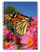 Monarch On Pink Asters Spiral Notebook