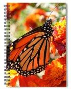 Monarch On Marigold Spiral Notebook