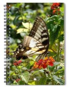 Monarch Pause Spiral Notebook