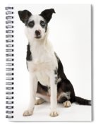 Mongrel Dog, Border Collie Cross Spiral Notebook