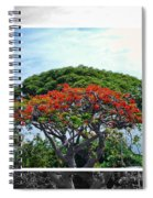 Monkey Pod Trees - Kona Hawaii Spiral Notebook