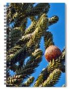 Monkey Puzzle Tree B Spiral Notebook