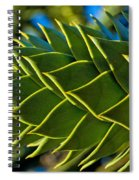 Monkey Puzzle Tree D Spiral Notebook