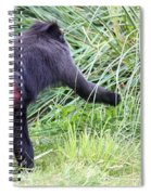 Monkey Showing Red Bottom Spiral Notebook