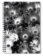 Monochrome Asters Spiral Notebook