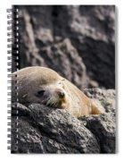 Montague Island Seal Spiral Notebook