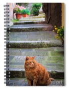 Montepulciano Cat Spiral Notebook