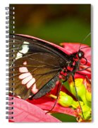 Montezuma Cattleheart Butterfly Spiral Notebook