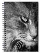 Moody Cat Spiral Notebook