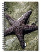 Moody Starfish I Spiral Notebook