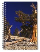 Moon And Bristlecone Pines Spiral Notebook