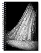 Moonflower And Rainwater  Spiral Notebook