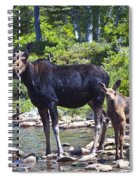 Moose And Baby 4 Spiral Notebook
