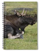 Moose At Rest Spiral Notebook