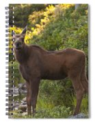 Moose Baby Sniffing Morning Air Spiral Notebook