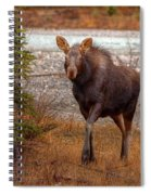 Moose Calf Spiral Notebook