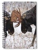Moose Fighting, Gaspesie National Park Spiral Notebook