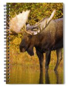 Moose In Glacial Kettle Pond  Spiral Notebook