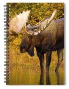 Moose In Glacial Kettle Pond  Spiral Notebook