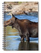 Moose On The  Gros Ventre River Spiral Notebook